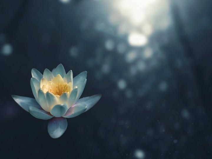 Clase gratis día Internacional de Yoga - Alameda